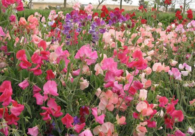Hoe ik een passie ontwikkelde voor tuinieren