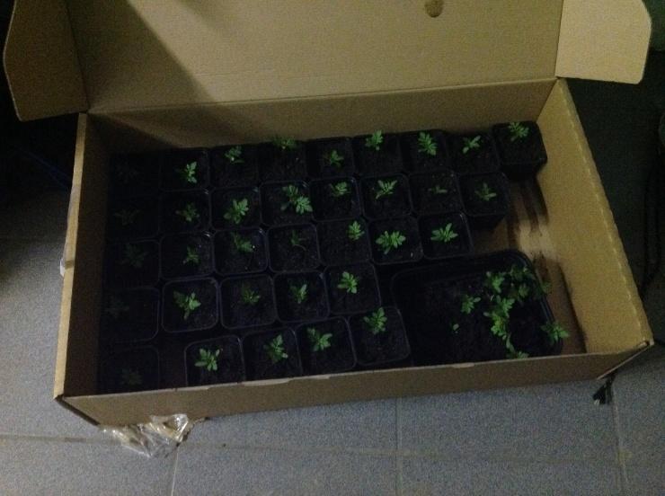 De afrikaantjes verhuizen morgen naar iemand z'n veranda, samen met een paar resterende pepers en tomaten planten