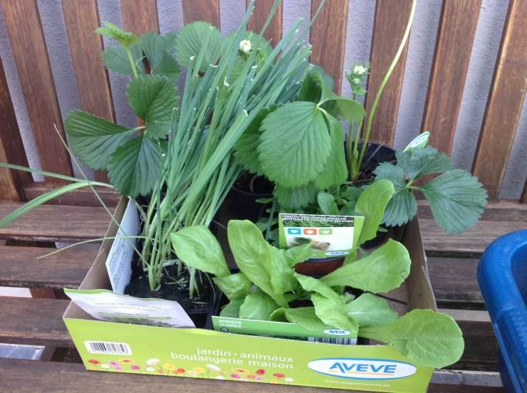 Wat plantjes gekocht bij Aveve