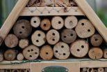 Onze metselbijen zijn goed actief.
