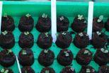 Allerlei soorten bladkool : Tatsoi, palmkool, bladkool mengeling