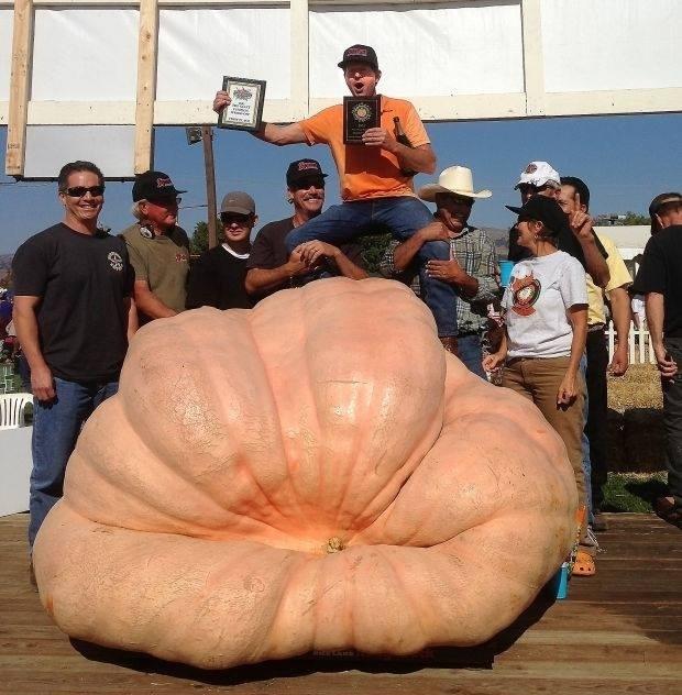 2032 pound Giant Pumpkin - 2013