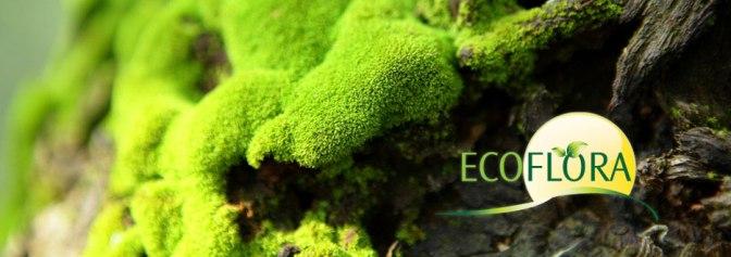 Ecoflora heeft nieuw plantgoed vanaf 24april