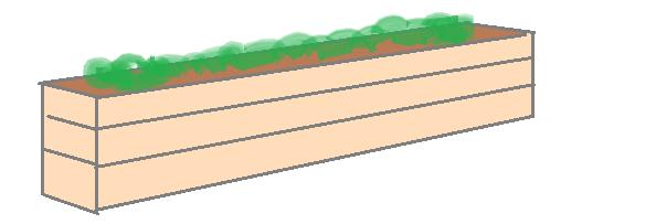 wortelbed