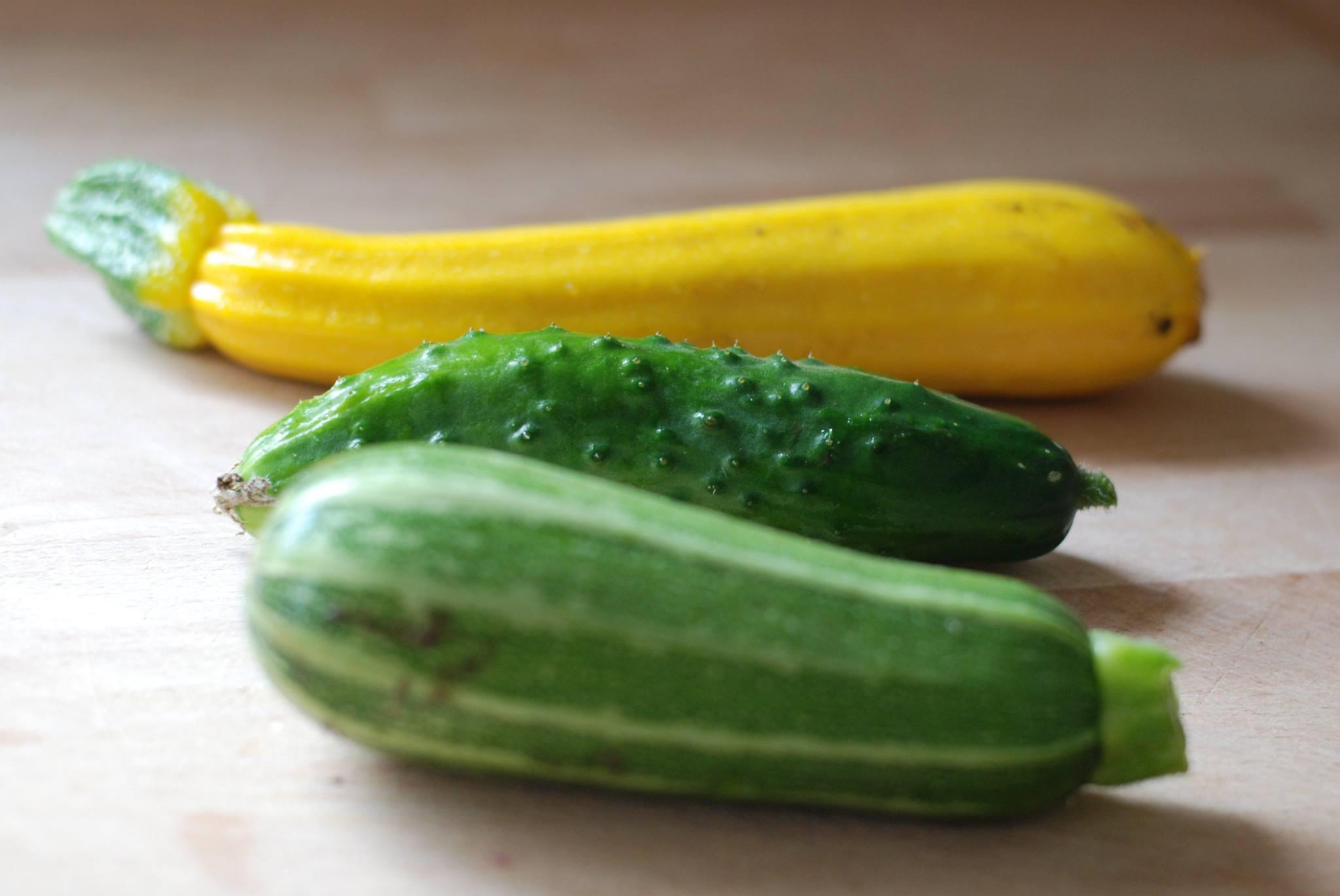 Bladkool jans moestuin - De komkommers ...