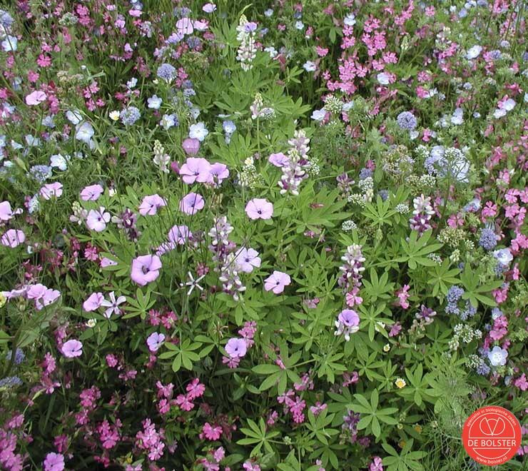 De plaats onder de kleine druivelaars zal maar eentonig zijn, wanneer er enkel hakselhout en mulch ligt. Geef mij maar een mooi tapijt bloemen :)