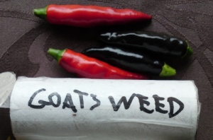 Goats-weed3