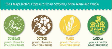ISAAA-Major-GMO-Crops