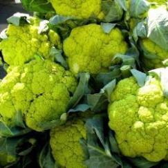 138200-bloemkool-alverda-vitaverde-f1-verdant-f1