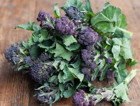 broccoli_purplesprouting