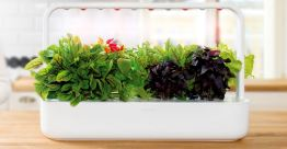 2016-11-18-14_28_35-indoor-herb-garden-and-indoor-gardening-kits-_-click-grow