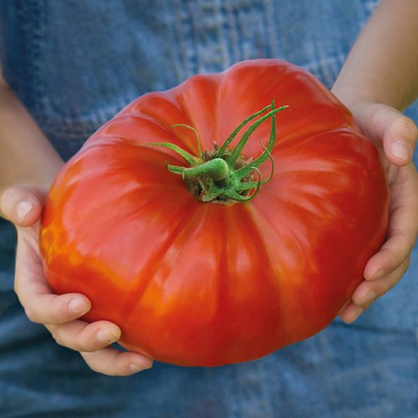 Welke tomaten moet je zeker eens proberen in 2017?