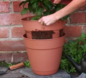 2017-03-07 11_42_57-(1) Nifty Outdoors - This easy-harvest potato planter is perfect for...