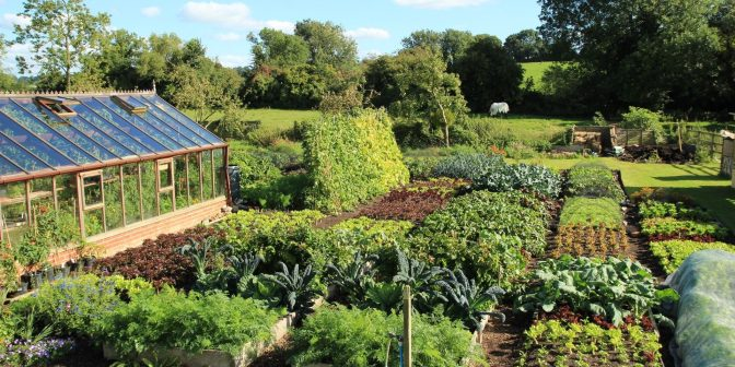 Boek review: Charles Dowding's Vegetable Garden Diary