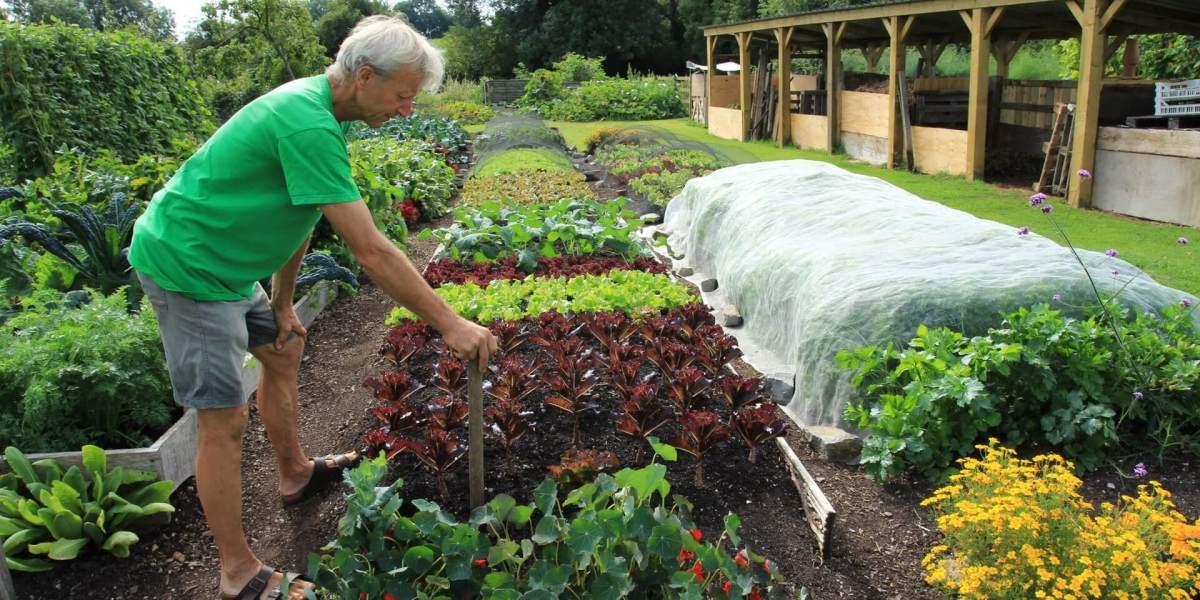 Is het al te laat om een moestuin te beginnen jans moestuin for Garden maintenance work